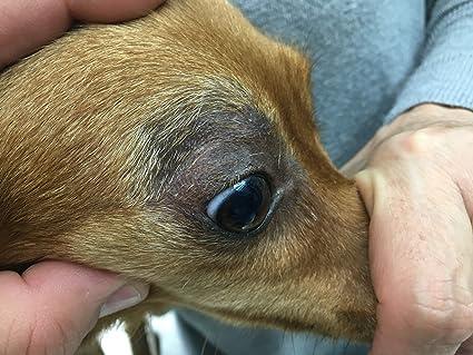 OZONOVET 15 LIPOGEL Gel Uso tópico en Dermatitis y Otitis de Mascotas Que inhibe el Medio de contaminación de bacterias, Hongos, levaduras y Virus. ...