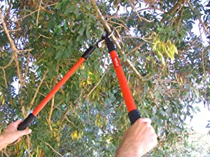A brief guide to getting best garden loppers - Gardening in october a brief to do list ...