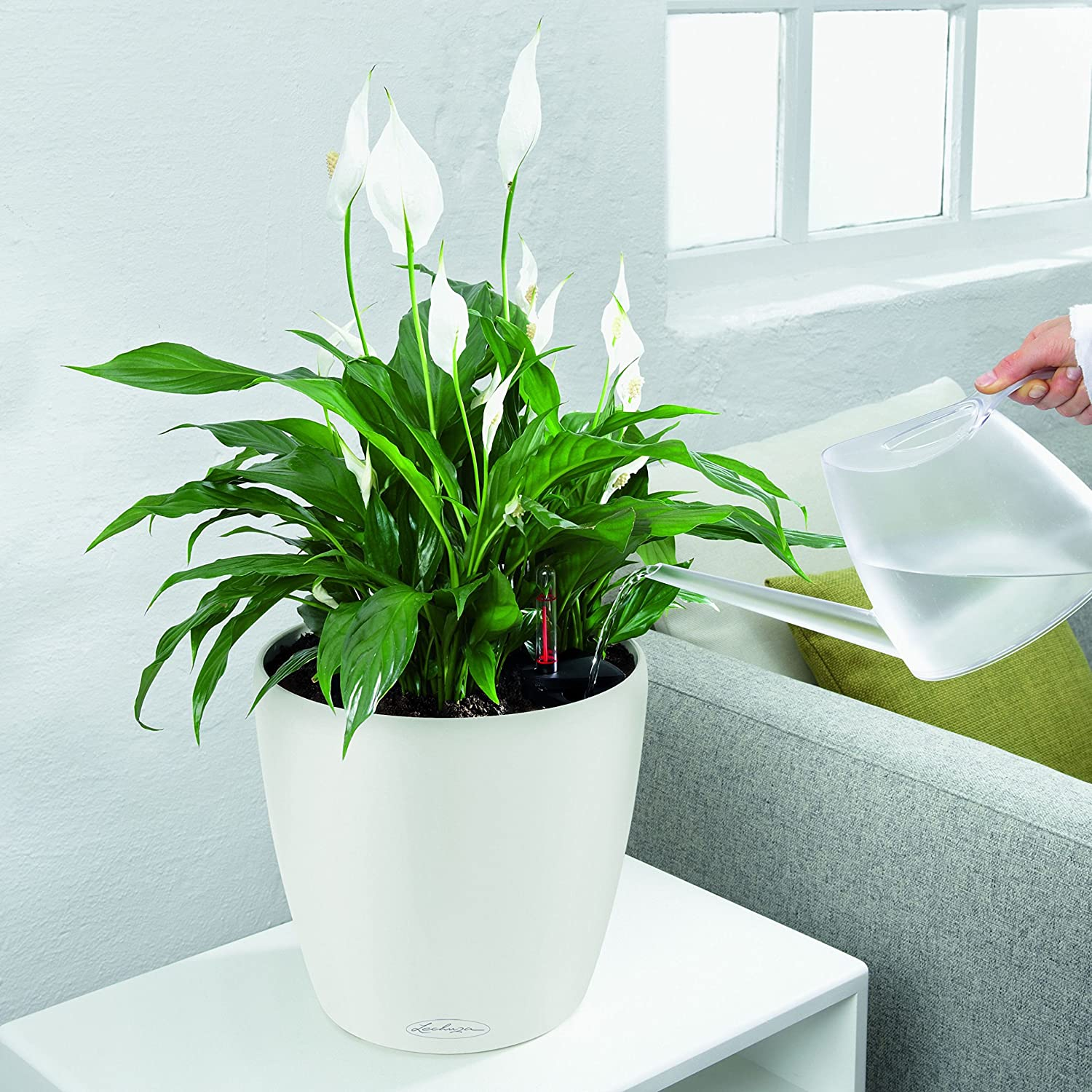 Lechuza Classico Color 21 Self-Watering Garden Planter for Indoor and Outdoor Use, White Matte