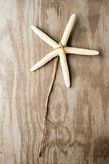 Amazon.com: Hinterland Trading White Finger Starfish Nautical ...