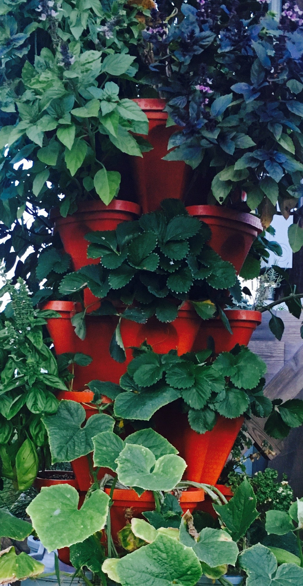 Cucumber Stack Enjoy For Growing Strawberry Plant Stacky Tomato LARGE Vertical Gardening Stackable Planters by Mr Grow More Using Limited Space And Minimum Effort - Build Your Own Backyard Vertical Garden Pepper DIY Stacking Container System