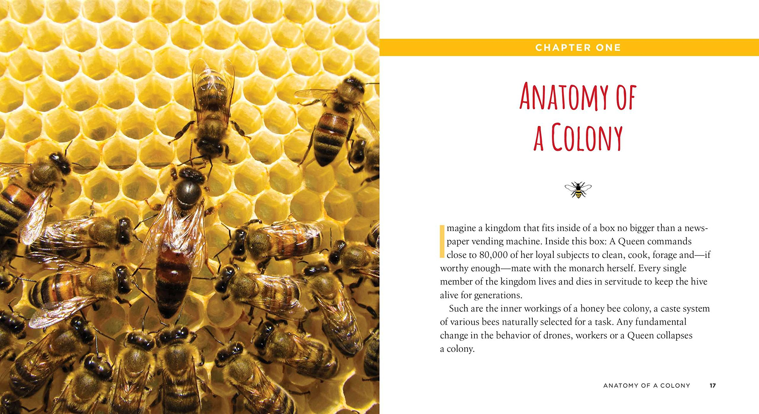 50 Ways To Save The Honey Bees And Change The World J Scott