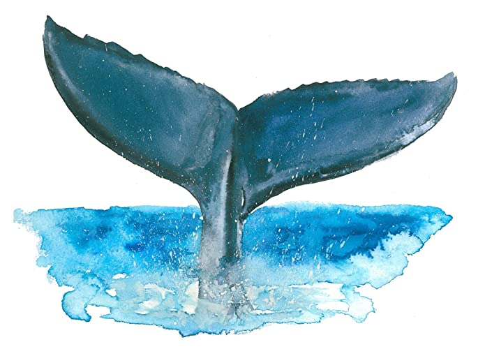 Amazon Com Whale Tail Art Print 8x10 A064 Whale Tail Picture