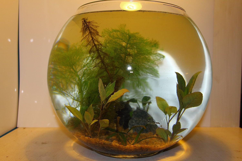 Mini Mondi Biotop Minia Qua rium Wabi kusa 30 cm, juego completo, pequeño con plantas, agua, mitad de suelos piedras preciosas: Amazon.es: Productos para ...