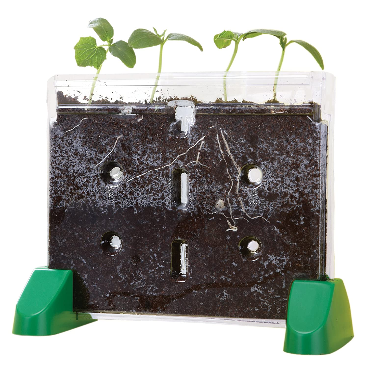 Amazoncom Educational Insights Sprout Grow Window Toys Games