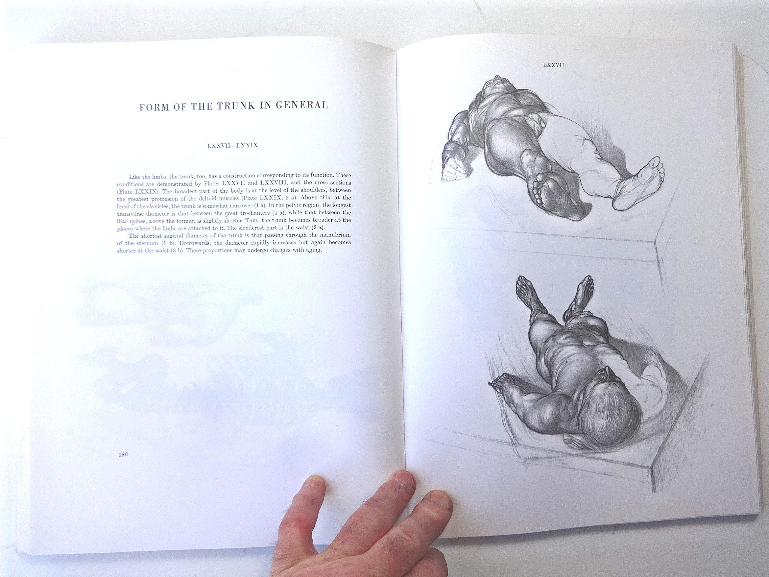 Anatomy for the Artist: Jeno Barcsay: 9780814800102: Books - Amazon.ca