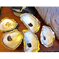5 Gilded Oyster Shell Dishes with Painted Gold or Silver Rim and Clear Gloss Finish