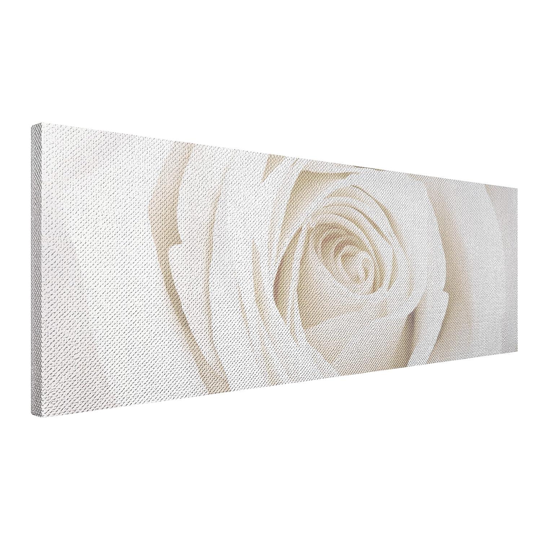 Apalis Rosen Leinwandbild - No.11 Pretty Weiß Rose - 120x40cm - Blumenbild Größe 40cm x 120cm