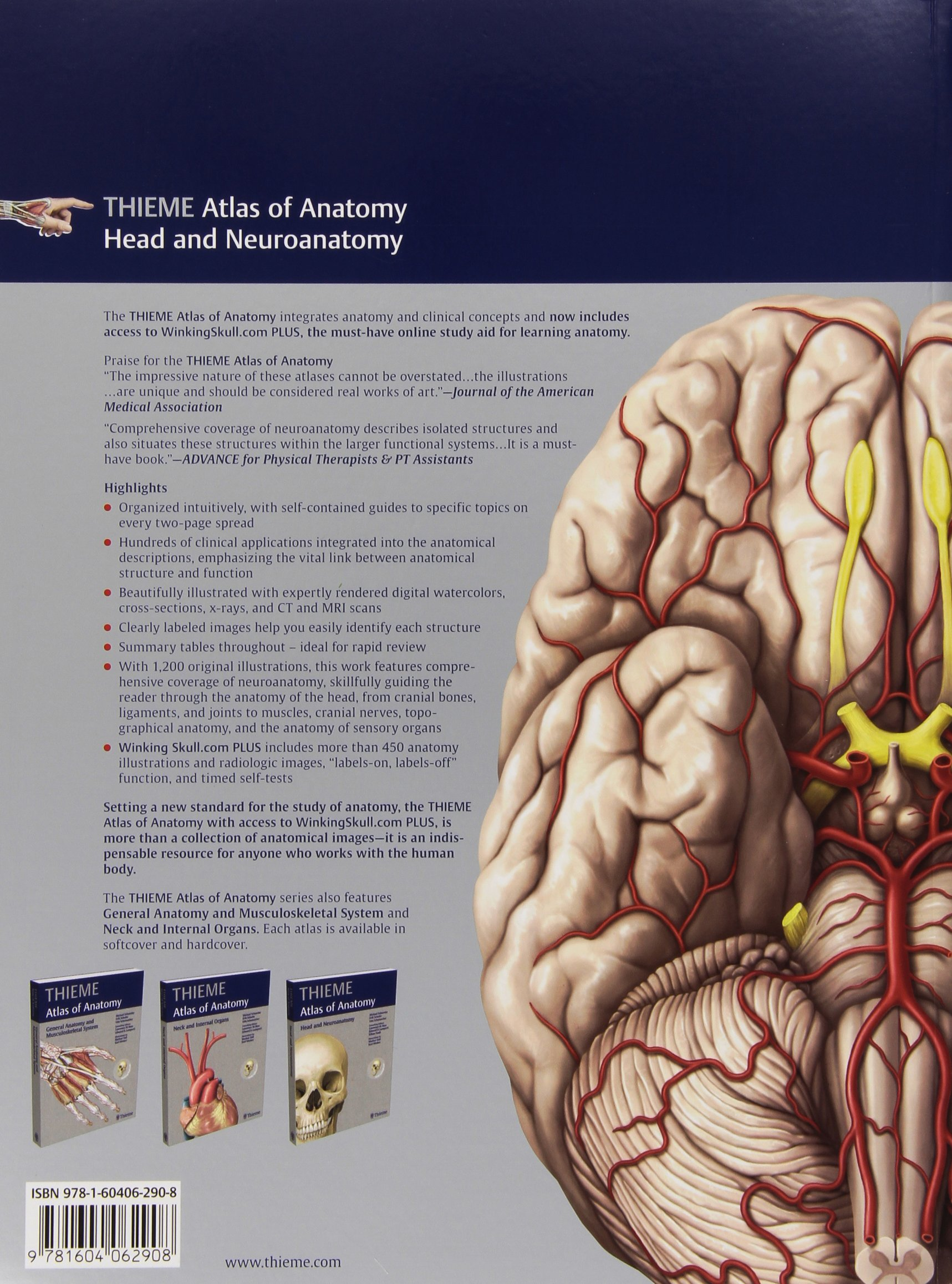 Head And Neuroanatomy Thieme Atlas Of Anatomy Amazon Erik