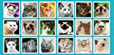 Cat Kitten Meow Sounds: Funny, Cute Feline Voices