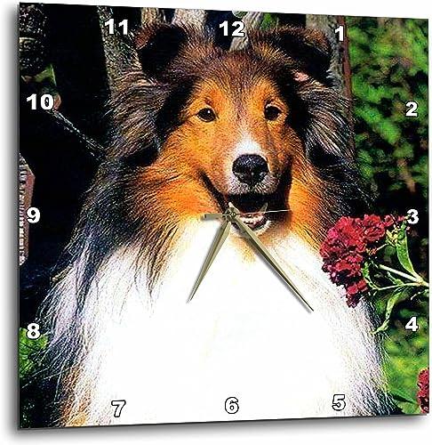 3dRose Dogs Sheltie Shetland Sheepdog – Shetland Sheepdog – 15×15 Wall Clock DPP_639_3