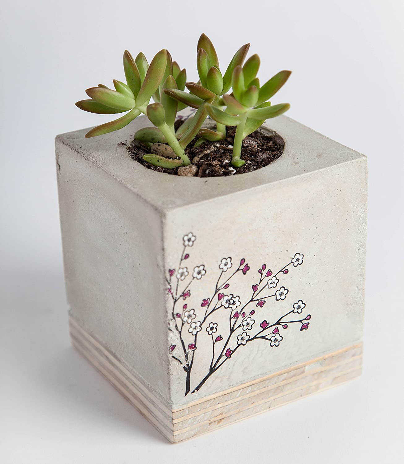 Concrete Planter: Cherry Blossom