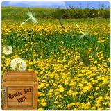 Spring Flower Yellow Dandelion Live Wallpaper