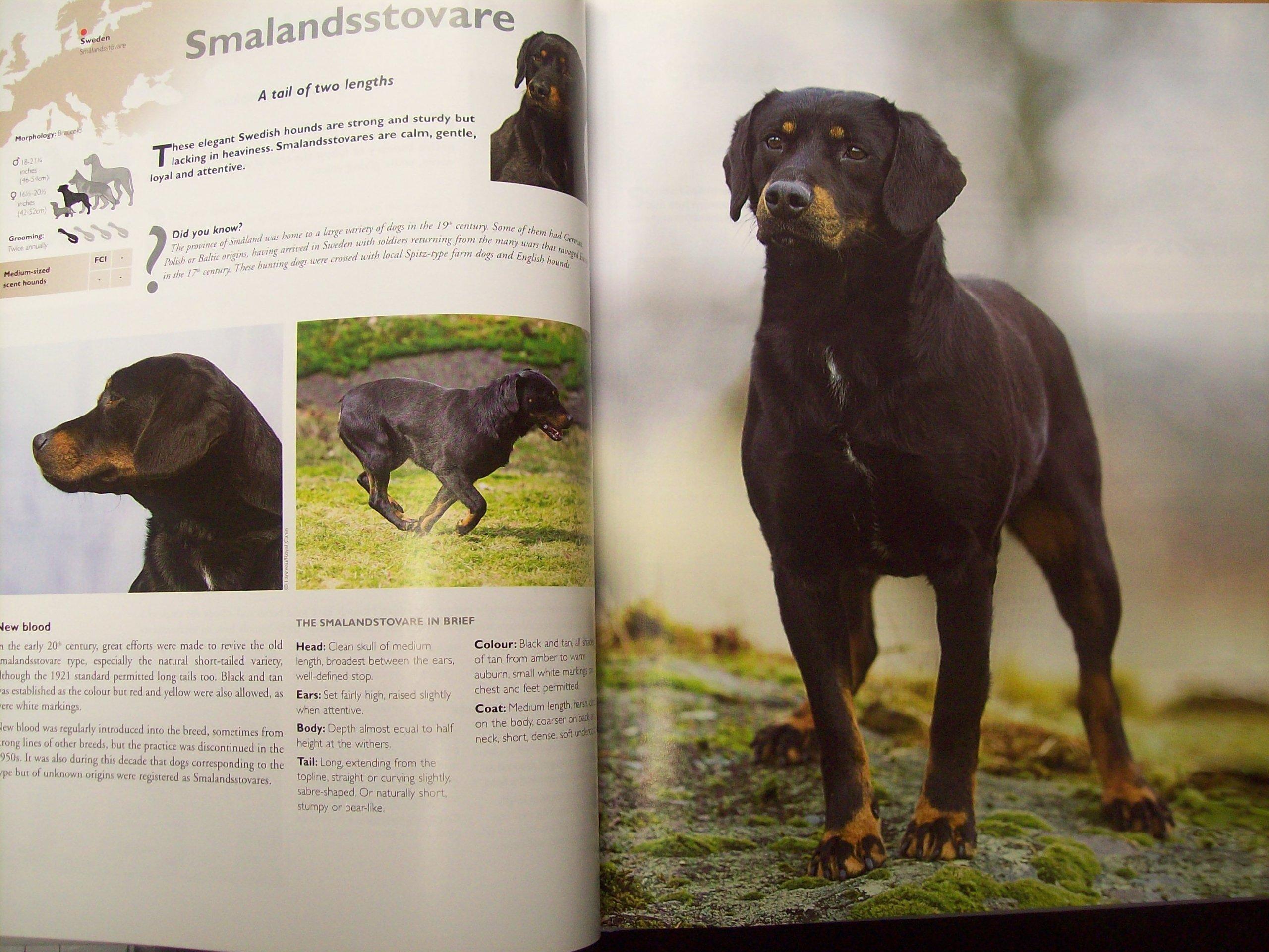 Dog Encyclopedia Book
