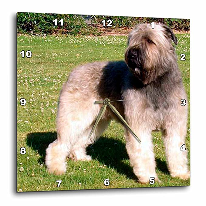 Bouvier 3dRose Dogs Bouvier 10x10 Wall Clock dpp/_989/_1