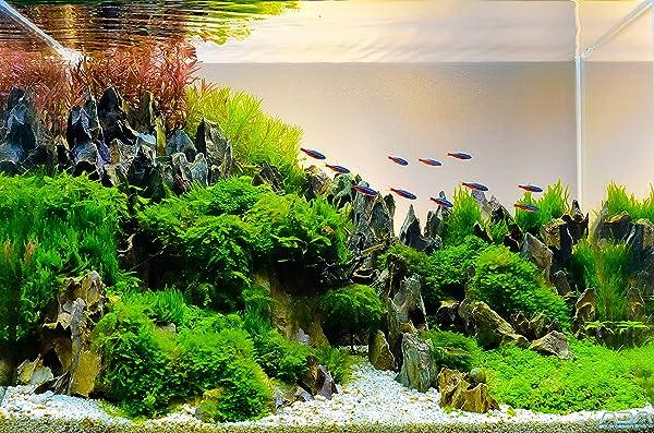 Best-Rocks-for-Freshwater-Aquarium