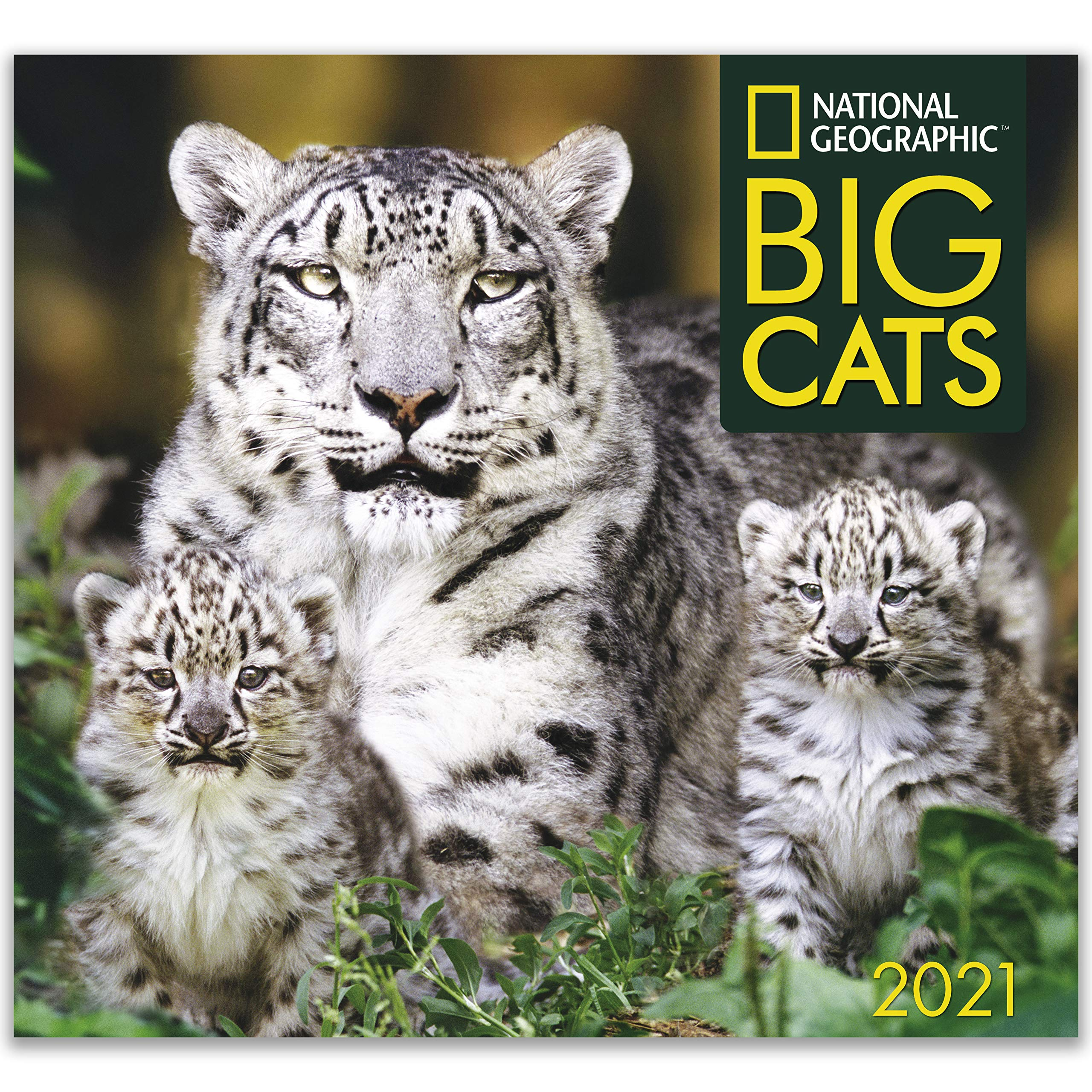 National Geographic Big Cats 2021 Wall Calendar: Zebra Publishing