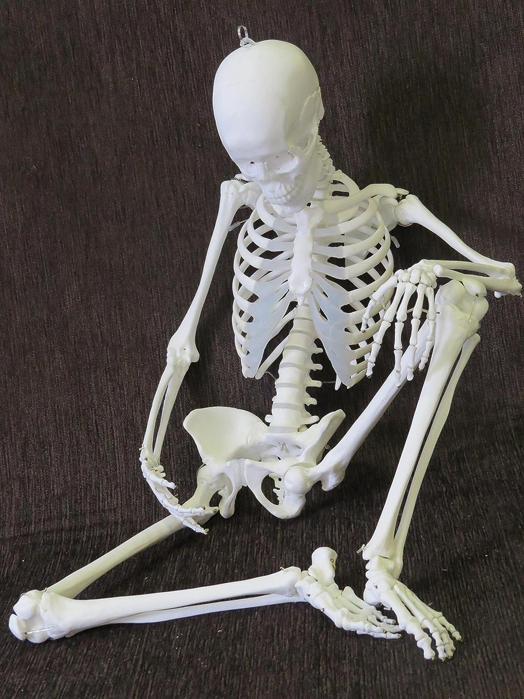 1/2サイズ全可動スーパーフレキシブル女性全身骨格模型   B07DH3H1R2