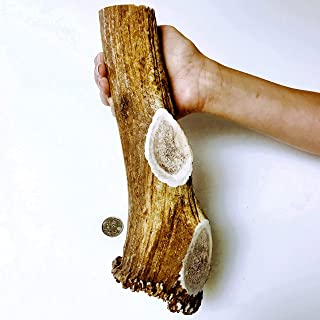 product image for Monster Whole Elk - Elk Antler Dog Chew - Grade A Premium - Organic - Made in USA - No Mess