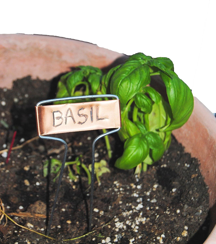 Etiquetas para plantas de cobre de 10, 5