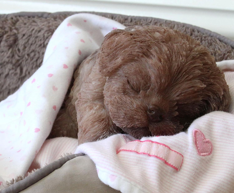 Amazon.com: silibabies it s un cachorro Girl. Completamente ...