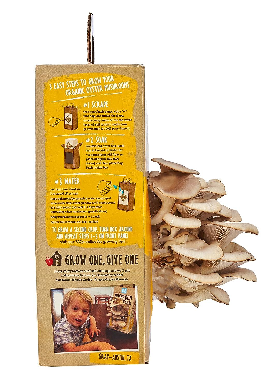 amazon com back to the roots mushroom farm mushroom growing kit