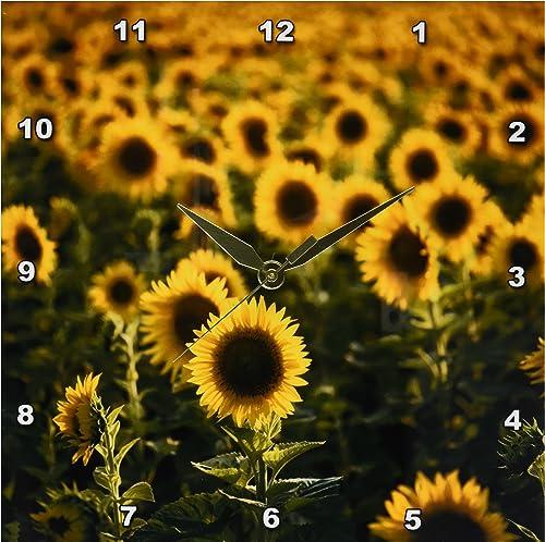 3dRose DPP_210046_1 France, Vaucluse, Sunflowers Field Wall Clock, 10 by 10