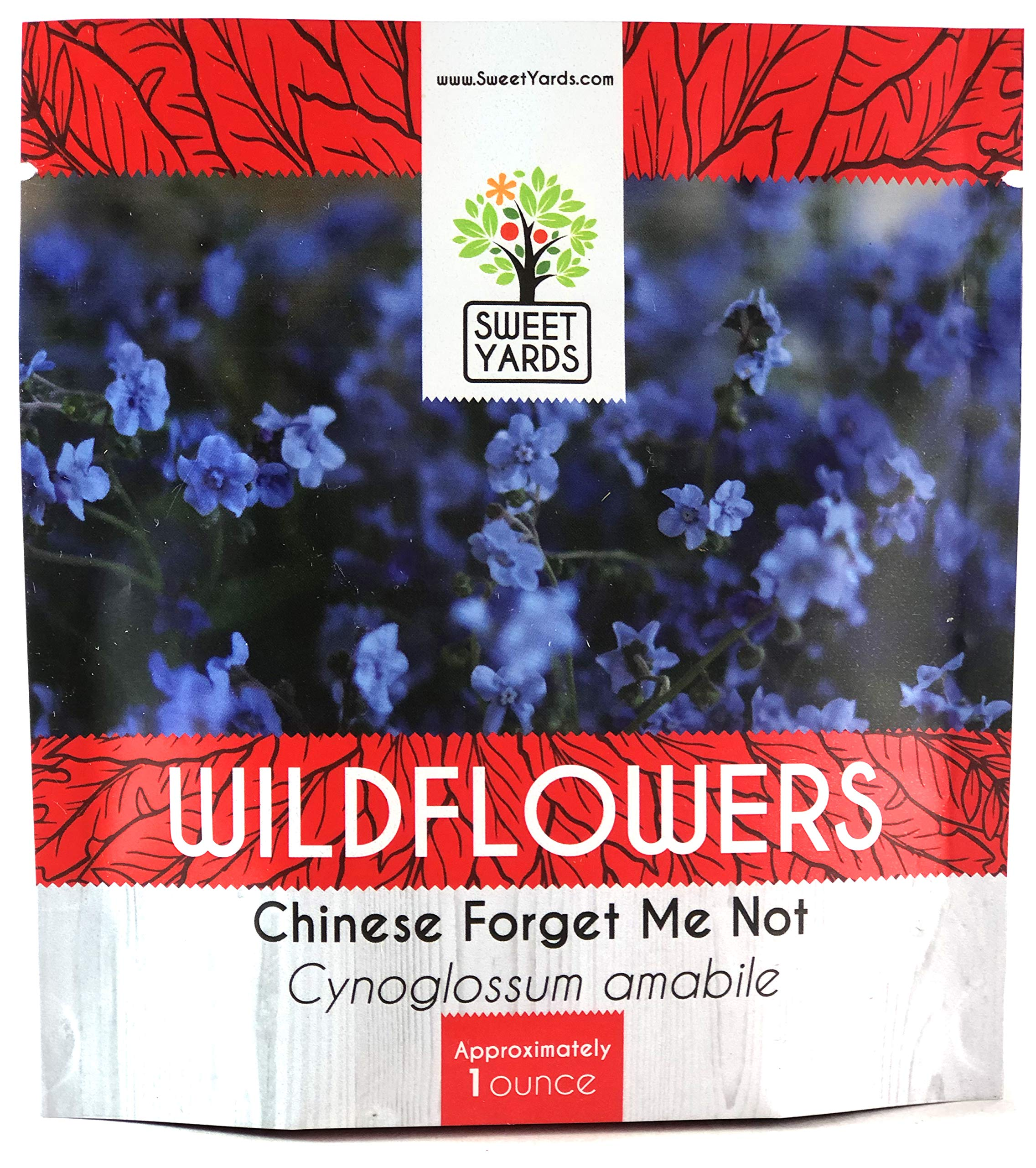 how to grow chinese forget me not seeds
