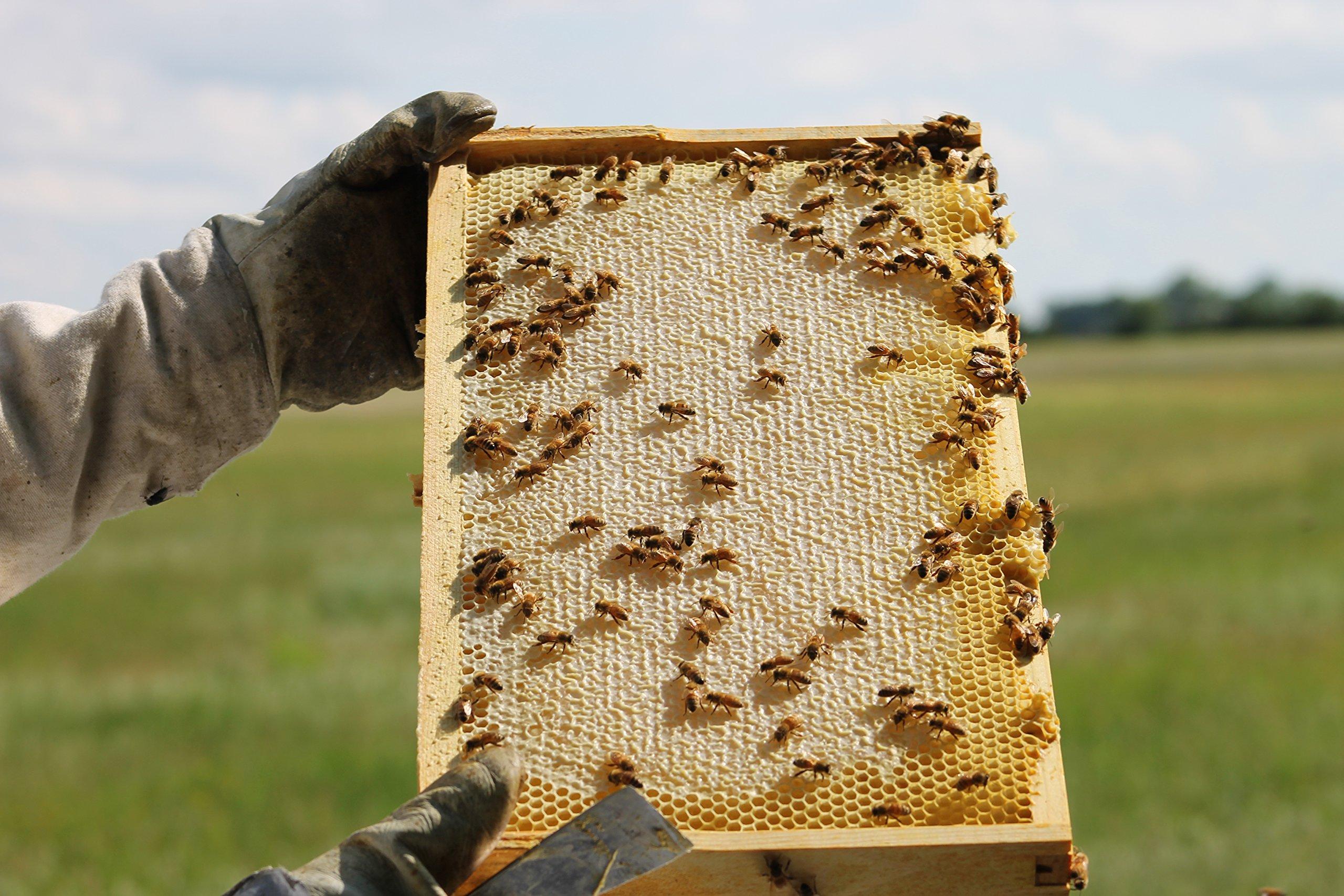 Raw Honey Pure Natural Nebraska Honey One 2lb Jar by Prairie River Honey Farm (Image #4)