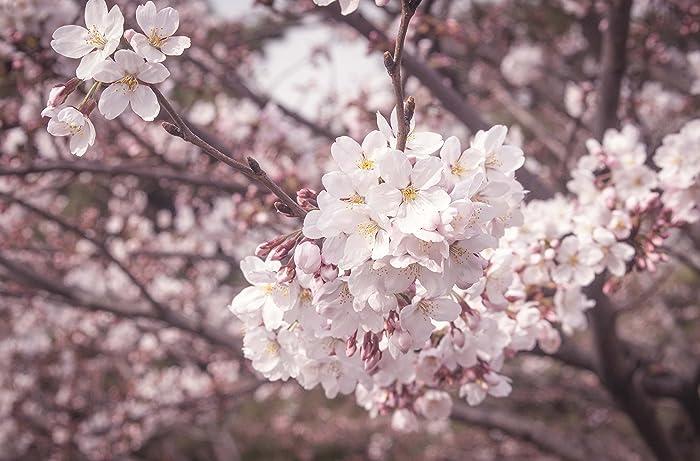 Amazon pink flower trees boram k fine art pink flower trees mightylinksfo