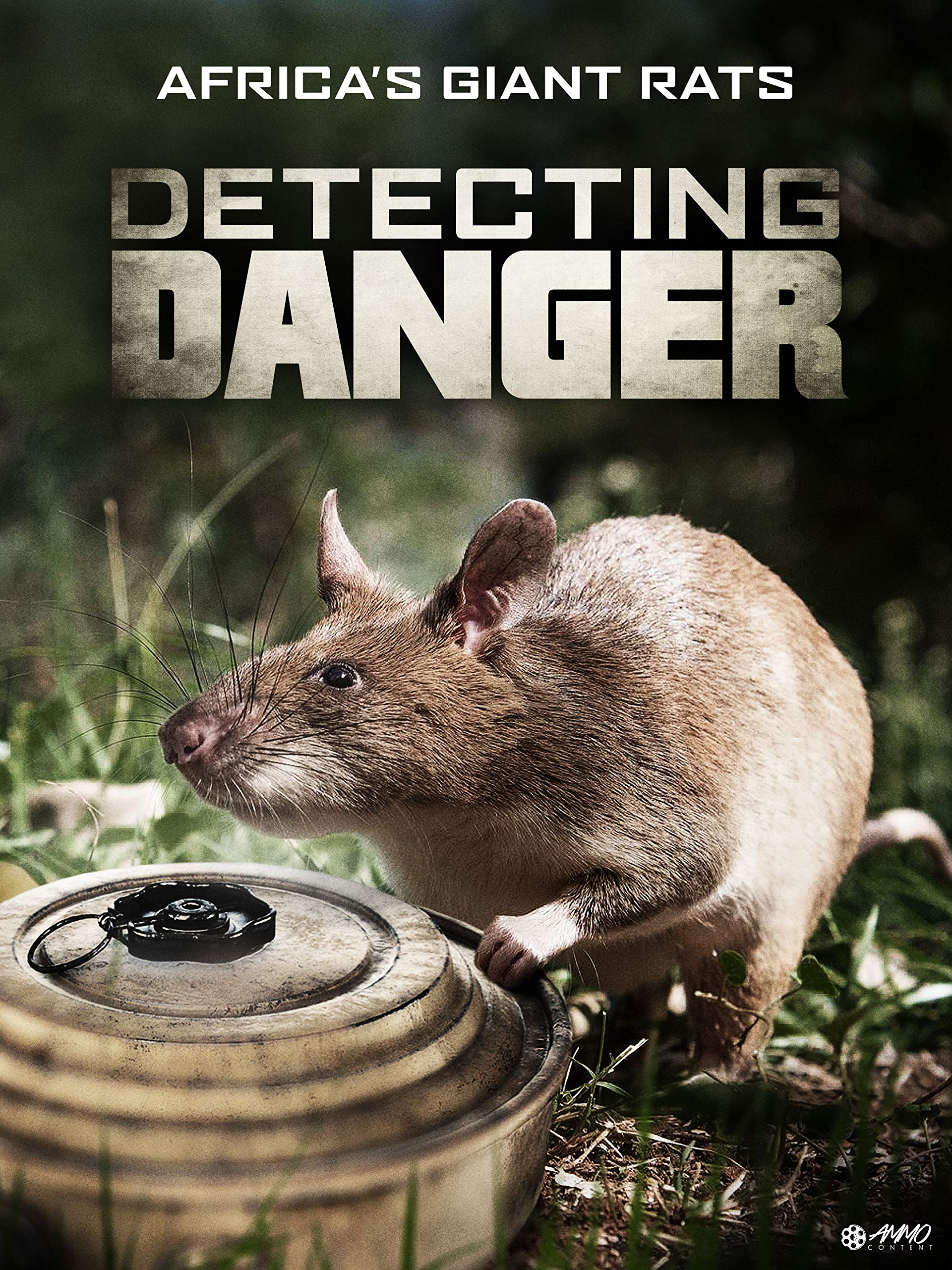 Detecting Danger - Africa's Giant Rats on Amazon Prime Video UK