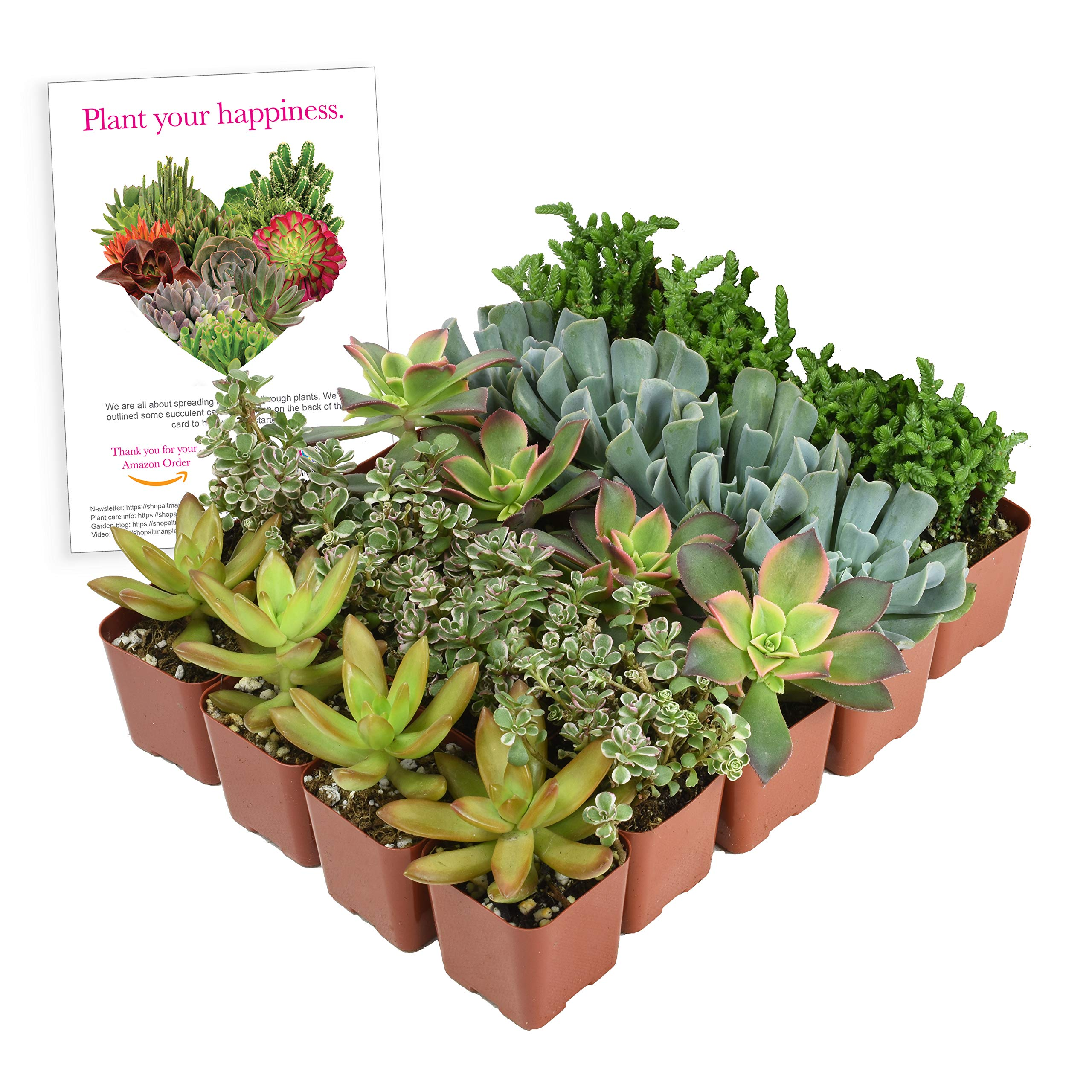 Altman Plants Mini Live Assorted Succulents Weddings, Party favors, DIY terrariums, Gifts 2'' 20 Pack