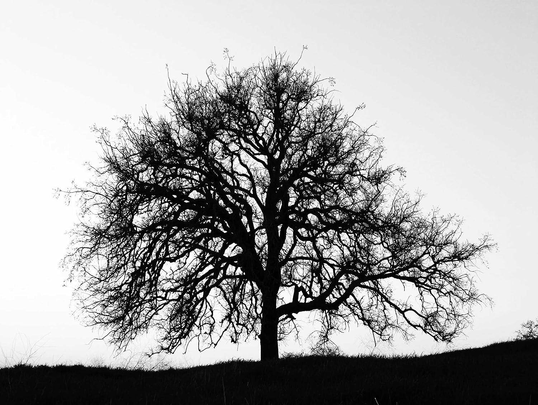 Amazon PHOTOGRAPHY TREE SILHOUETTE BLACK WHITE COOL STARK ART PRINT POSTER BB9145 Black And White Tree Art Posters Prints
