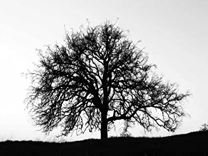 Photography tree silhouette black white cool stark art print poster bb9145