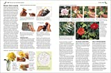 Propagating Plants: How to Create New Plants for