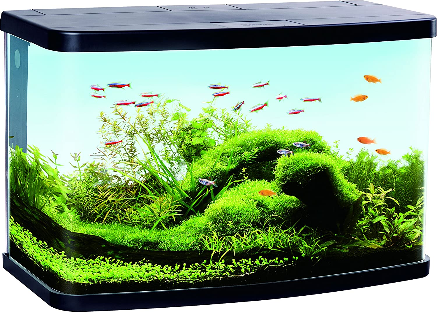 Duvo + Aquarium Panorama VS60 Filter für Aquaristik schwarz 61 x 30,6 x 39,8 cm