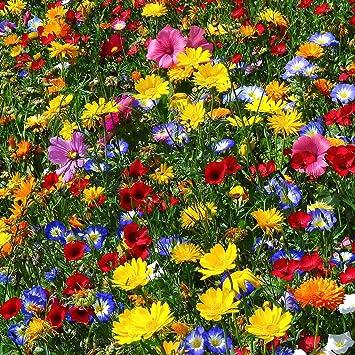 Aktion Wildblumen 2019: bl/ühende und summende Steiermark Qulista Samenhaus A 50pcs Wildblumenwiese Mischungen 10m/² f/ür Bienen Schmettling Insekten Blumensamen mehrj/ährig