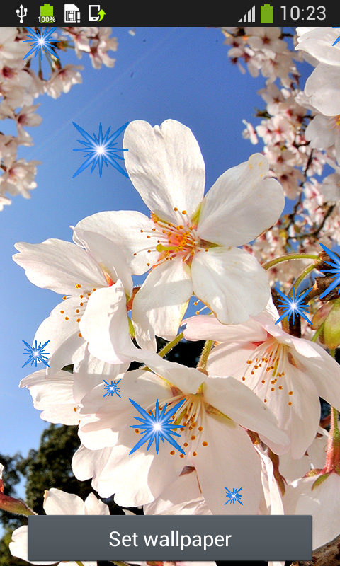 Amazon.com: Cherry Blossom Live Wallpapers: Appstore for ...