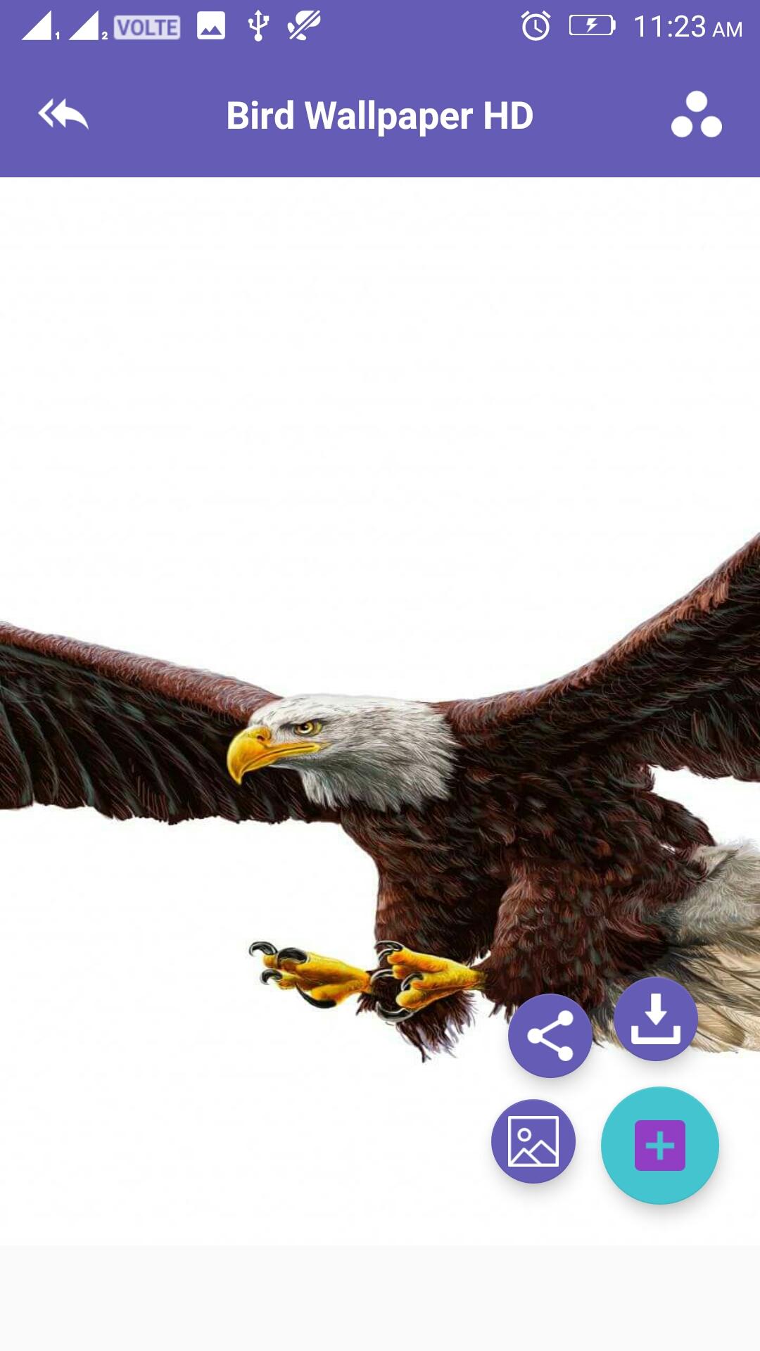 Amazon.com Bird 20K Wallpaper  Apps & Games