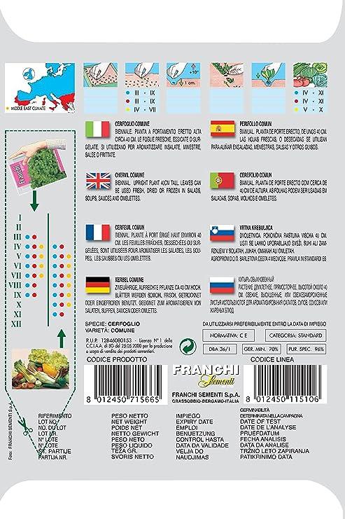 Amazon.com : Italian Heirloom Herb - Chervil : Chervil Plants ...