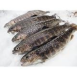岩魚(イワナ) 新潟魚沼産 20㎝サイズ 5尾入