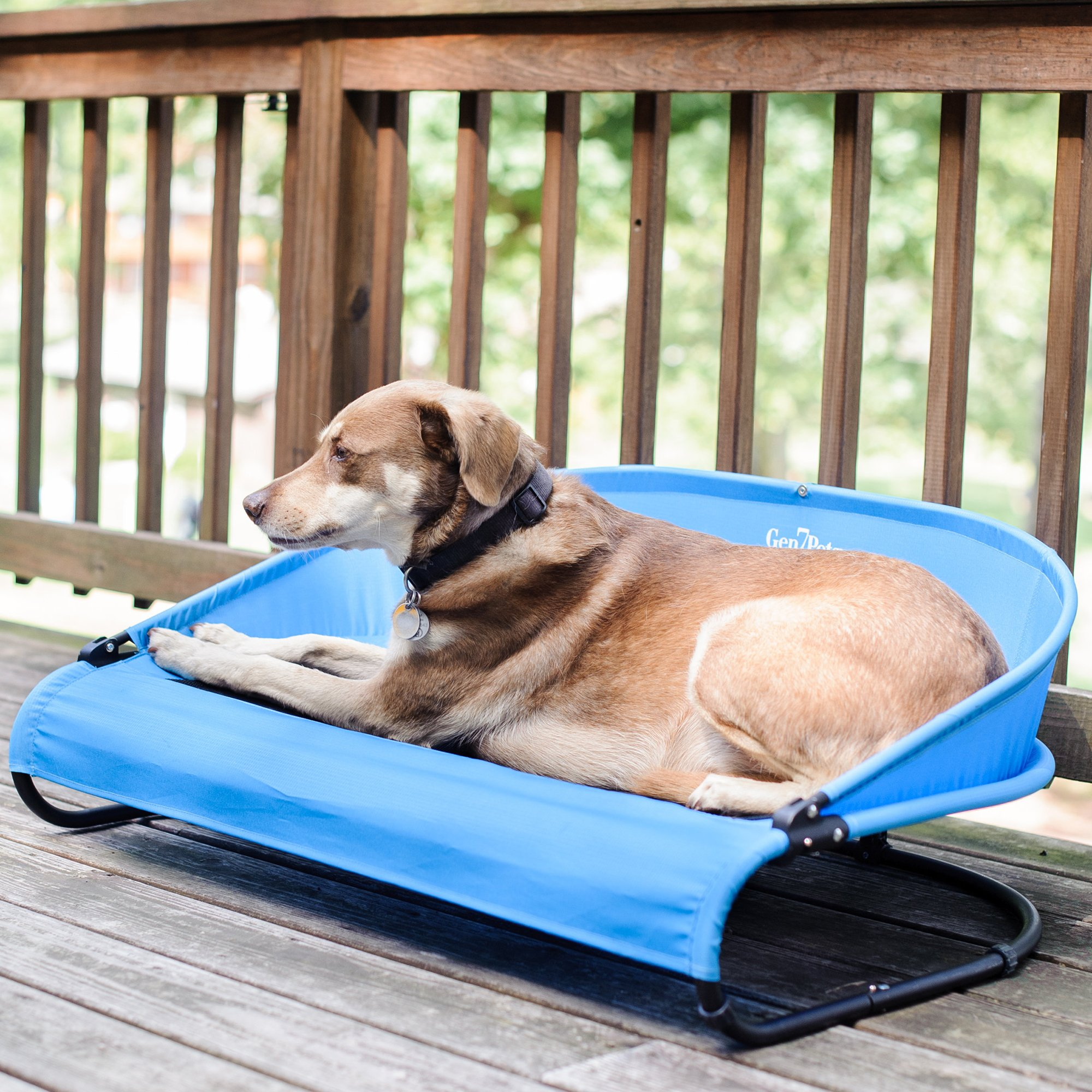 Gen7Pets Cool Air Cot Pet Bed for Dogs and Cats 90lbs – Curved Raised Back, Air Flow for Comfort and Portable for Travel
