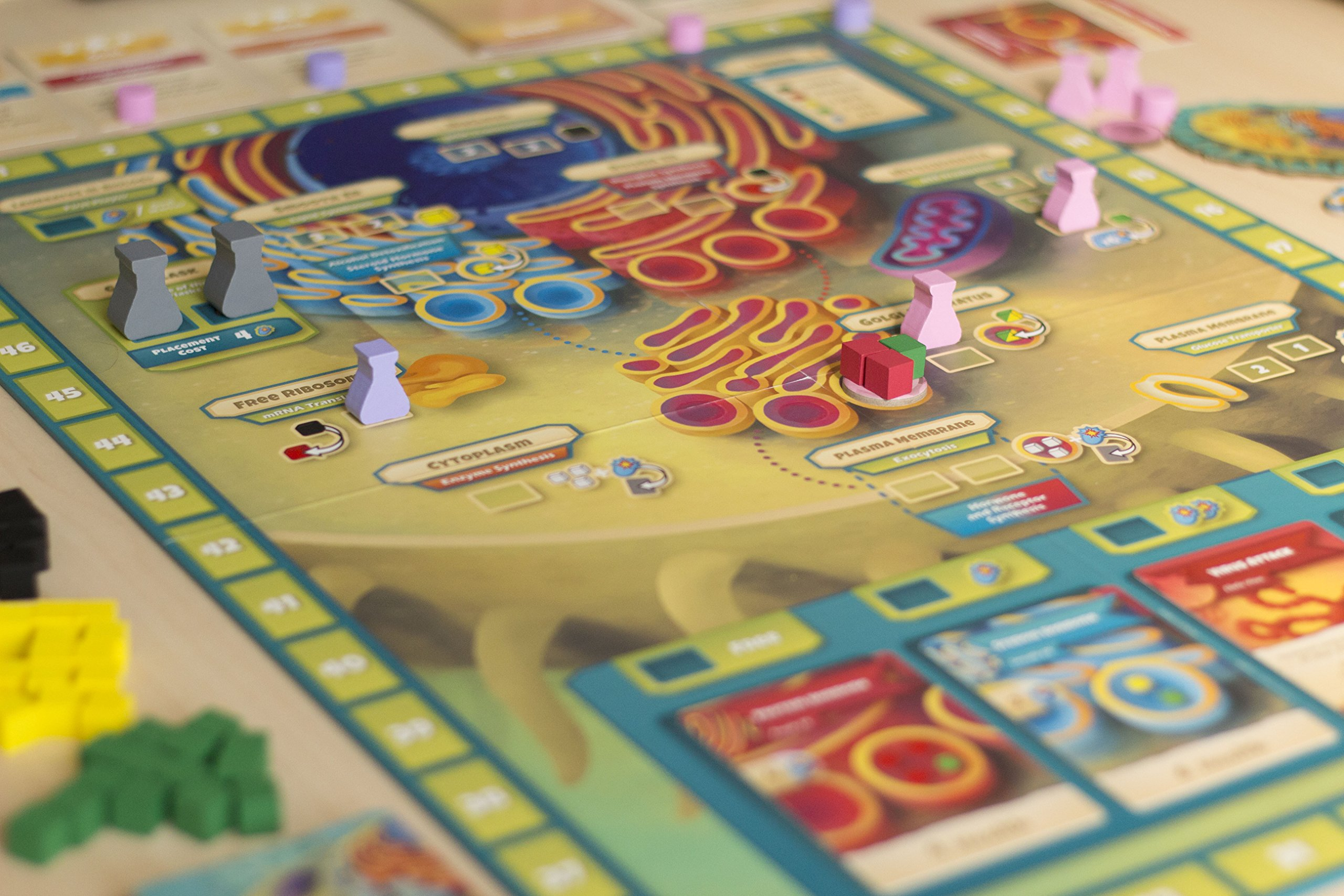 Genius Games Cytosis: A Cell Biology, Board Game