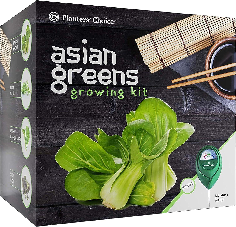 Kit de Cultivo de Verduras Asiáticas: Todo Incluido para Cultivar Fácilmente 4 Verduras Tradicionales Asiáticas a Partir de Semillas + Medidor de Humedad: Bok Choy, Mizuna, GAI Chow, Savoy Tatsoi