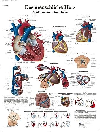 3B Scientific Lehrtafel - Das menschliche Herz - Anatomie und ...