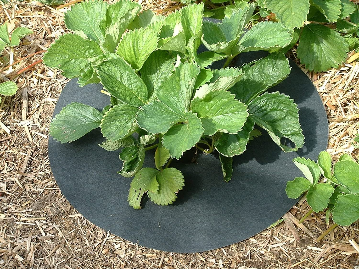 Gardening-Naturally Copper Impregnated Strawberry Mats - Keep Slugs & Snails away from plants. 15