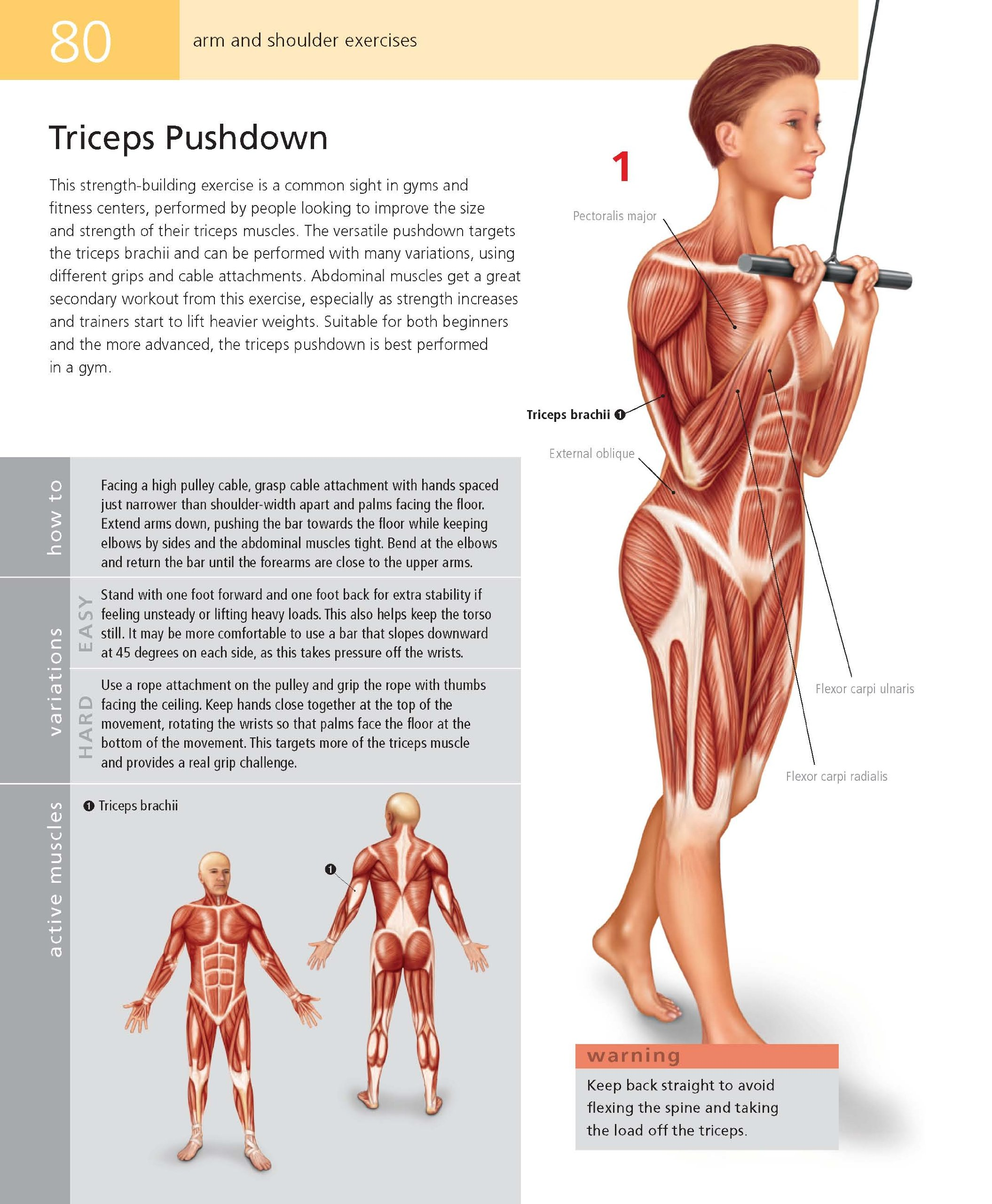 Students Anatomy Of Exercise Manual 50 Essential Exercises