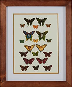 Amazon Brand – Stone & Beam Modern Green and Gold Butterfly Print Wall Art, Brown Frame, 18.5