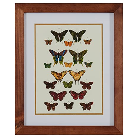 Amazon Com Modern Green And Gold Butterfly Print Brown Frame 18 5