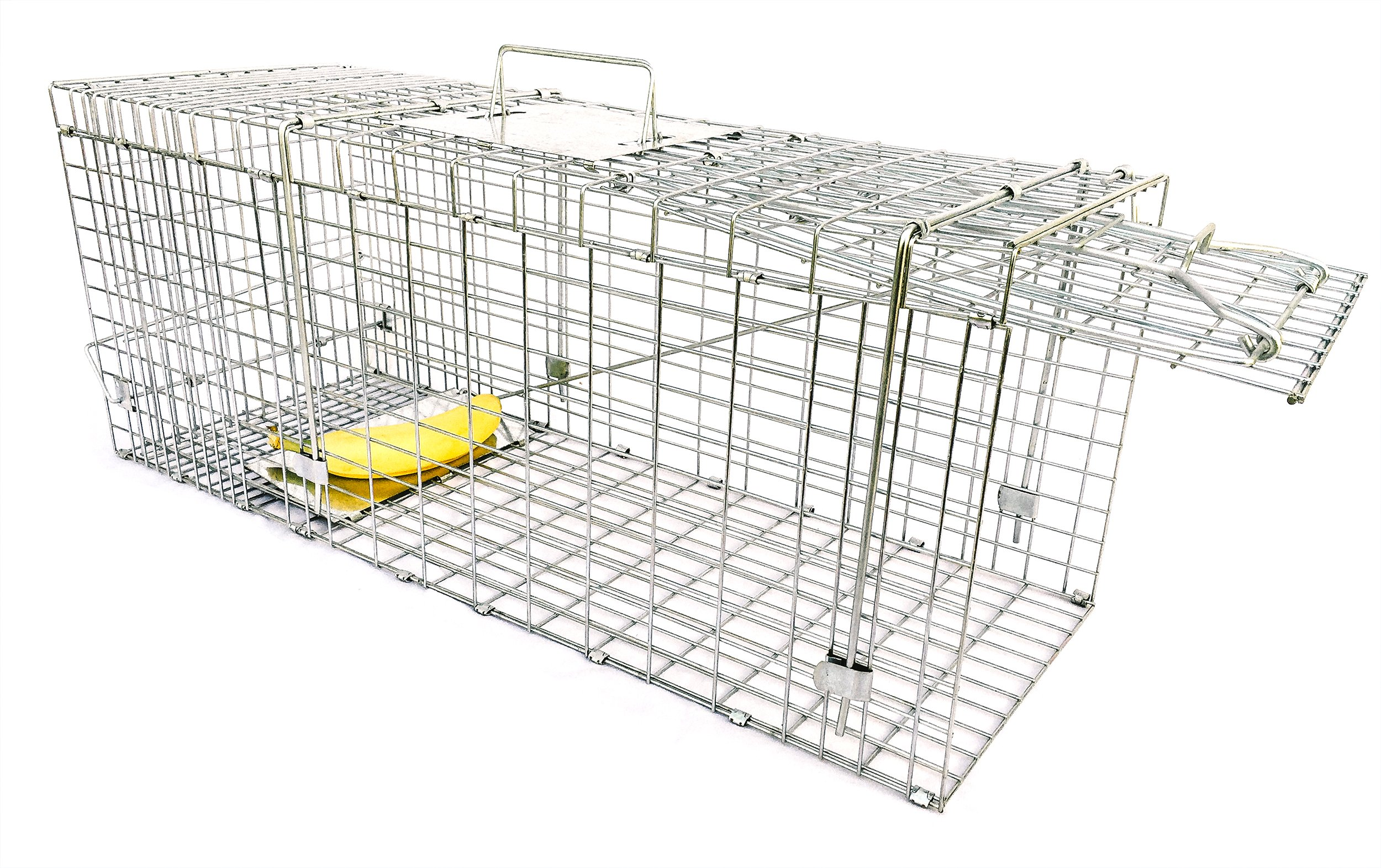 Large Collapsible Humane Live Animal Trap Perfect for Raccoons, Stray Cats, Gopher, Opossum, Rabbits by Ranger Products